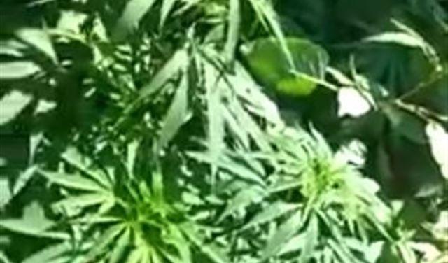 بالفيديو: حشيشة في إحدى حدائق جامع في لبنان