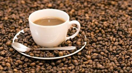 القهوة الألذ والأغلى من براز.. الفيلة!!