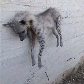 بالصور.. قتلوه وعلّقوه على الحائط في عكار متباهين