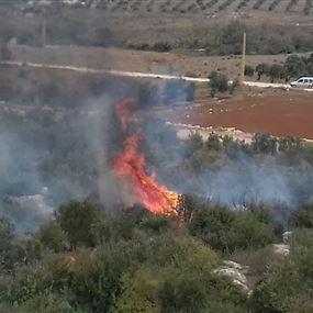 بالصور: حريق اشجار من الزيتون في الهيشة