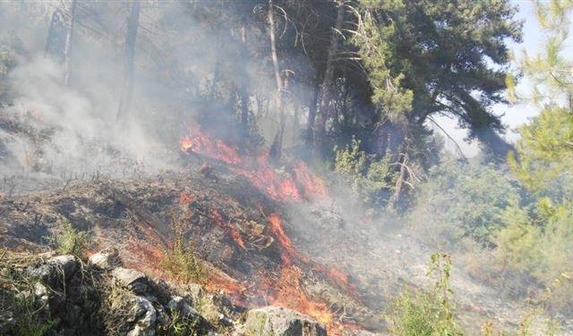 بالصور: النيران مندلعة بأحراج في الشوف!