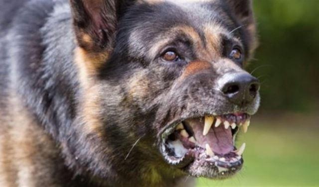جريحان إثر هجومٍ لكلبٍ مسعور في عين جرفا